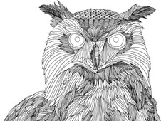 owl T-Shirt Design by