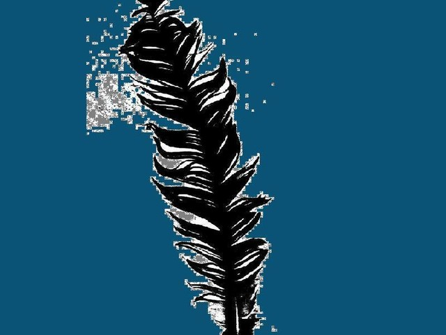 A Feather on Blue