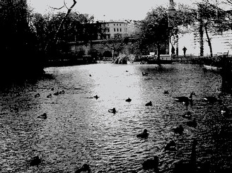 Duckpond by RoyalFuss