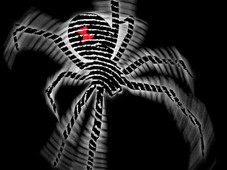 Spiderr T-Shirt Design by