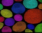 Fingerprint by Freksen