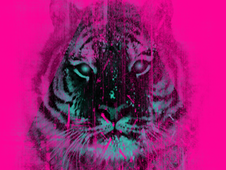 Pink Tiger T-Shirt Design by