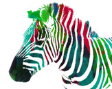 Zebra in RGB by aboutwhat