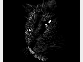 Noir Cat by yurilobo