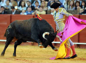spain bull bullfighting