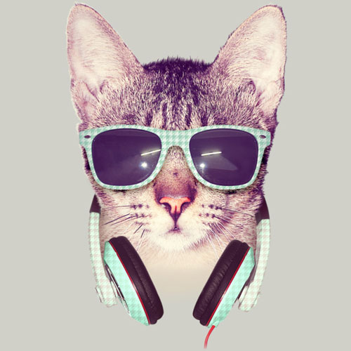 cool cat dzeri29 kitty kitten sunglasses retro photo real tshirt tee