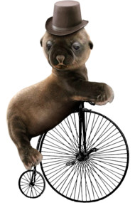 SEAL UNICYCLE