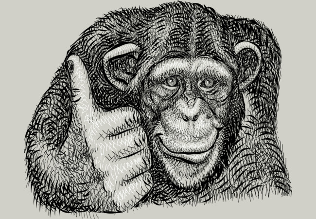 Thumb Up Chimpanzee Artistic Drawing