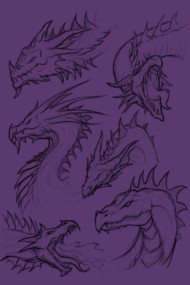 Dragon Sketches