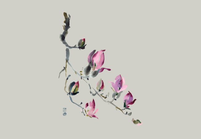 Tulip Magnolia  Artwork
