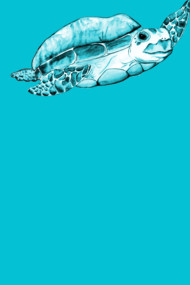 Teal (Sea) Turtle