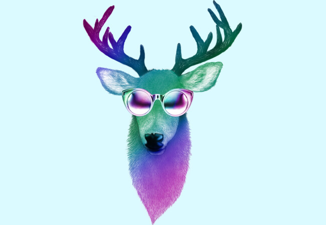Disco Stag  Artwork