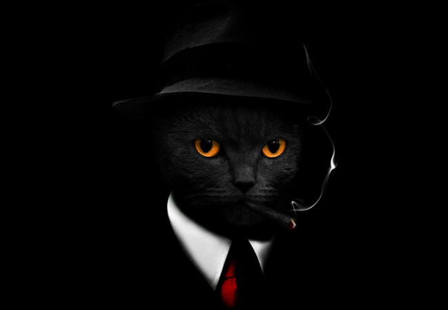 Secret Agent Cat  Artwork