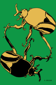 Yellow Beetles